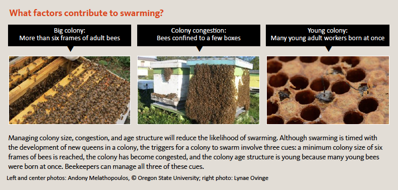 What factors contribute to swarming?