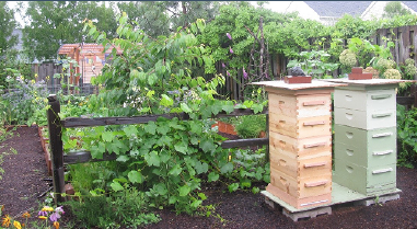 A well-situated backyard apiary surrounded by tall fencing and with restricted access