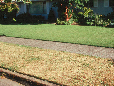 A dormant turfgrass stand (below) and an irrigated home lawn (above)