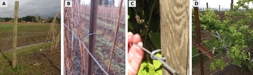 Trellis design options for moveable wire attachment to end posts (A), metal posts (B), wooden posts (C), and metal T-bars (D).