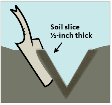 Soil slice 1/2-inch thick