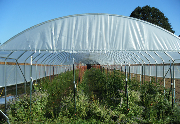 High tunnel tomato production using a trellis training system