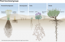 Figure 3. Each functional group fills a particular niche within an ecosystem.