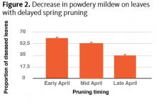 Decrease in powdery mildew on leaves with delayed spring pruning