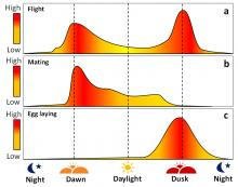 Figure 4. Daily flight (a), mating (b), and egg laying (c) activity of SWD during the growing season (adapted from Hamby et al. 2016). These behaviors are concentrated during cooler parts of the day, and diminish during the hotter parts of the day. All of these activities drop off during the dark because SWD uses vision to navigate and because its circadian rhythm causes it to rest during the night.