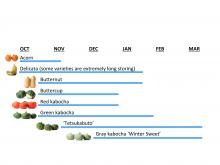 Figure: Jennifer Wetzel and Alex Stone, © Oregon State University Figure 8: Peak culinary quality for regionally high-performing kabocha and buttercup varieties. Cucurbita pepo 'Acorn' and 'Delicata' and Cucurbita moschata 'Butternut' are also included for reference.