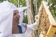 Figure 10. Cara Fritz searches for the queen in her backyard Corvallis hive.