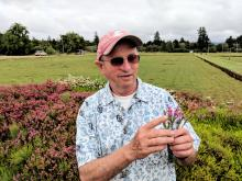 Washington State University faculty member Kim Patten holds up heather shrubs that bloom in late summer, interplanted with heather that blooms in early spring.