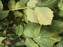 yellow spots on leaves
