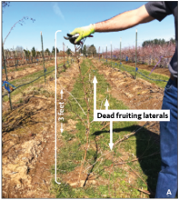 Pruning plants to 3 feet high