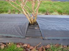 landscape staples holding weed mat down
