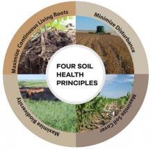 Maximize continuous living roots. Minimize disturbance. Maximize soil cover. Maximize biodiversity.