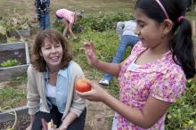 A student picks tomatoes at a community garden.