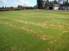 Patches of brown on large field