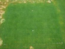 Patch of green grass surrounded by patches of brown