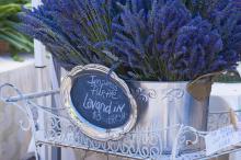 Fresh-cut purple lavandin in small metal metal tub