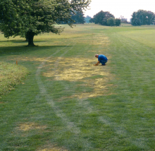 Man examining yellow patches on lawn