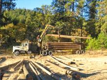 Logging truck and logs