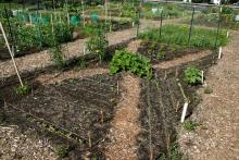 Traditional vegetable gardening in the ground can be achieved with either a fixed plot or a flexible one.
