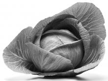 Cold-tolerant crops such as cabbage, chard, leaf lettuce, and kohlrabi do well in high-elevation gardens.