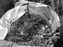 Extend the growing season by using a row cover or other device to protect plants from harsh weather.