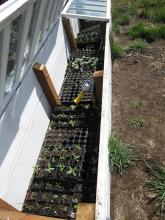 Propagating plants in a cold frame