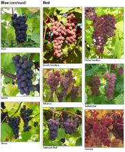 Photographs of cultivars, by color, page 3.