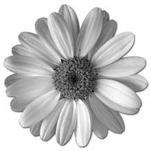 You can plant a variety of small-flowered plants such as daisies to attract beneficial insects to your garden.