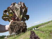 Growing a crop that you enjoy working with and believe in will get you through hard times and help you market it. Photos: Lynn Ketchum, © Oregon State University
