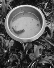 Slugs are attracted to the odor of beer and will drown in a beer-filled trap. You can purchase traps or make your own from yogurt containers.