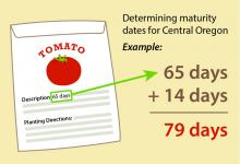 Maturity date on the seed packet or in the plant catalog should fall between 65 and 75 days.