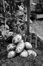 Root crops such as potatoes, carrots, and beets do well in areas with short growing seasons and cool nights.