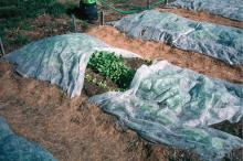 Row covers on raised beds