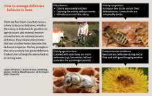 How to manage defensive behavior in bees