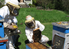 Colonies should be arranged in the apiary to enable the beekeeper to work with without bumping adjacent colonies or standing in the colony flight path