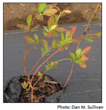 Figure 2. Composts high in soluble salts can injure sensitive plants under certain conditions.