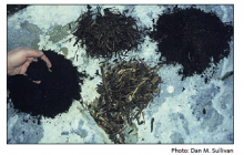 Figure 4. Particle size is more important for compost used in potting mixes than for compost intended for field application.