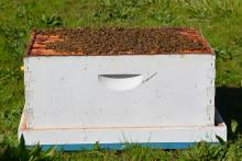 Figure 10. Hive body placed into the outer cover