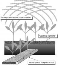 """Place sprinklers so that patterns overlap. Water to a depth of 6"""". Place drip hose alongside the row."""