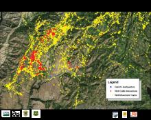 Distribution map of wolf B447 movement.