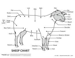 Image of Sheep Wall Chart Leader Guide publication