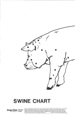 Image of Swine Wall Chart Leader Guide publication
