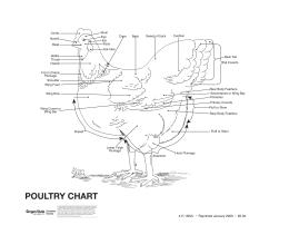 Image of Poultry Wall Chart Leader Guide publication