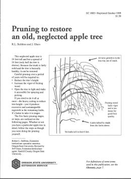 Image of Pruning to Restore an Old, Neglected Apple Tree publication