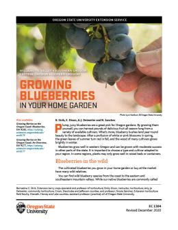 growing blueberries in your home garden, most of Oregon