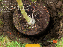 Cover image of Selecting, Planting, and Caring for a New Tree publication