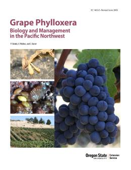 Image of Grape Phylloxera: Biology and Management in the Pacific Northwest publication