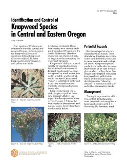 Image of Identification and Control of Knapweed Species in Central and Eastern Oregon publication