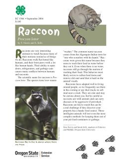 Image of The Wildlife Garden: Raccoon (Procyon Lotor) publication