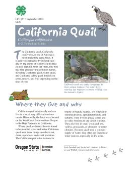 Image of The Wildlife Garden: California Quail (Callipepla californicac) publication